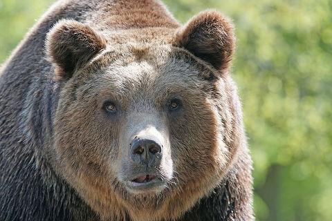 怖い ヒグマ クマに襲われた人たちのリアルに怖い体験談