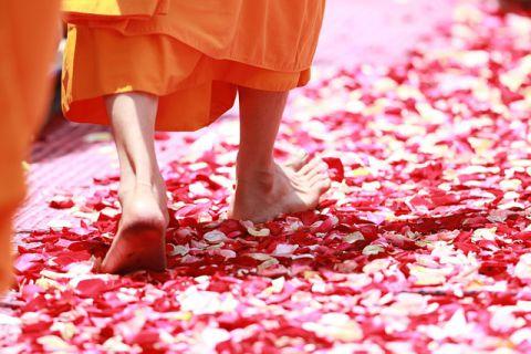 花びらの上を歩く僧侶の後ろ姿の写真
